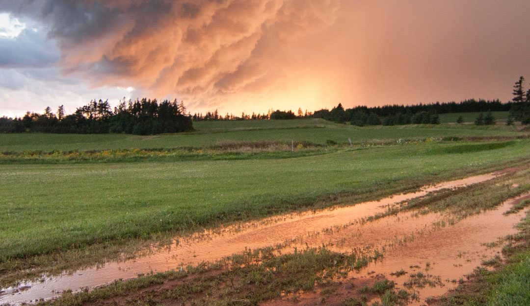 Top 3 Reasons Why Farmers Need Crop Insurance